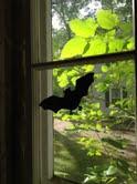 bats6