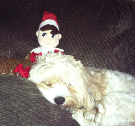 Elf hangs with the dog