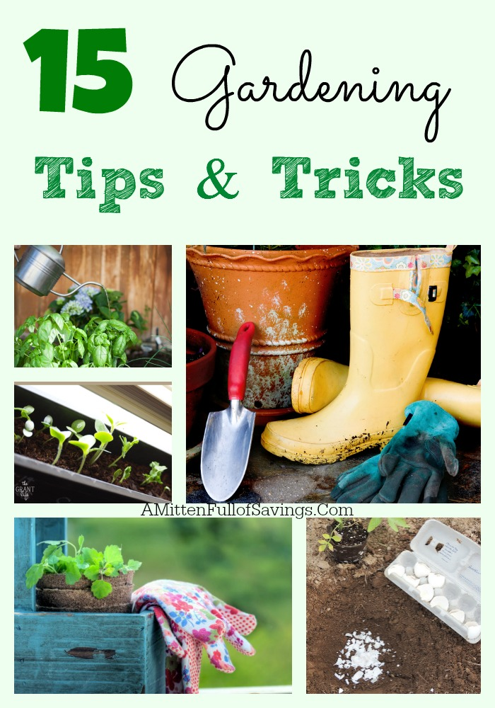 15 Gardening Tips and Tricks