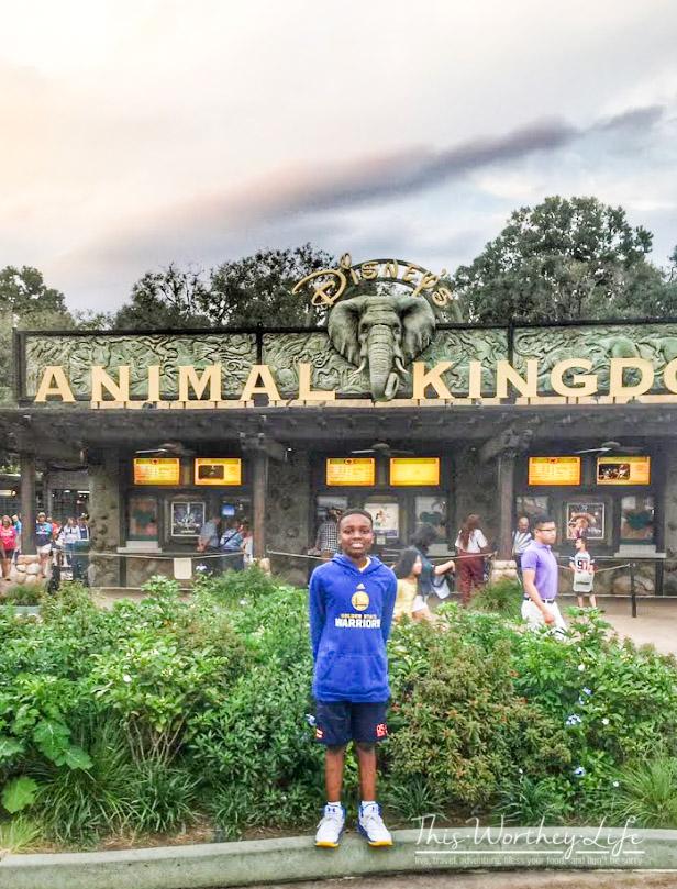 Disney's Animal Kingdom Safari Ride at night