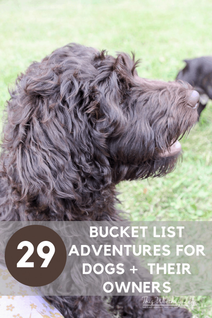Taking an adventure with your dog is a great way to create special bonding time, as well as new memories for you and your best friend. We put together a bucket list of adventures to have with your dog, plus sharing our dog's favorite treats! 29 Bucket List Adventures for Dogs + Their Owners