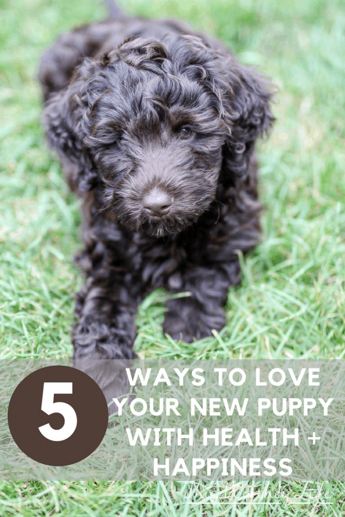 Did you get a new puppy or a new dog? It's important to establish a few rules when you get a new puppy, including how to care for a new puppy. Read 5 Ways To Love Your New Puppy With Health + Happiness to get new puppy care tips. What should you feed your new puppy? We share tips on what to feed your puppy and how to love them!