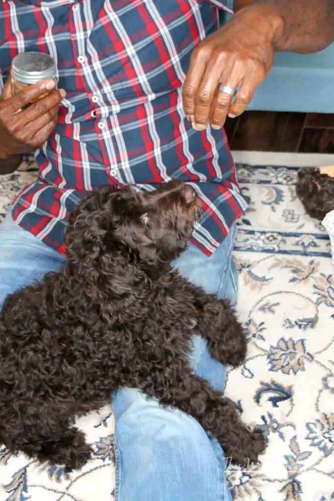 New Puppy Essentials Checklist