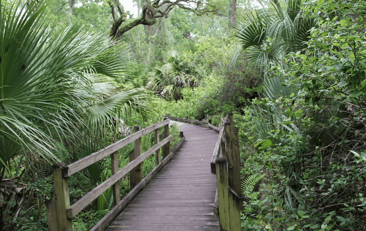 Ocala/Marion County has quite a lot to offer. Centrally located in Florida, this Florida Travel destination offers unique and memorable experiences for travelers looking to step outside the box and experience something new on their bucket list. Read on to see why Ocala/Marion County, Florida needs to be on your bucket list!