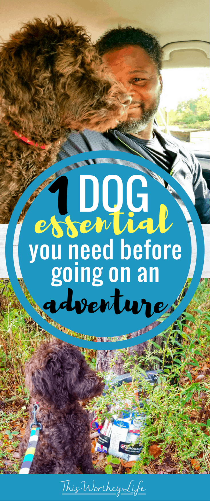 Dogs are great to take on a road trip, out hiking, or on a long walk. However, before you take your dog on an adventure, there is ONE essential you NEED to have! Read about that 1 Dog Essential You Need Before Taking A Road Trip | Hiking | Walking on the blog!