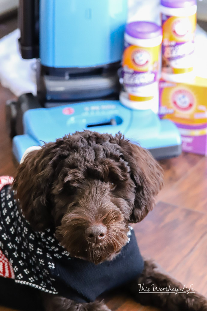 10 Top Ways To Keep Your Home Clean When You Have Pets. The holidays are here, and I'm sharing things I do to make sure my house is clean and ready to go. When you have pets, you may need to go the extra mile. Here's how I avoid doing a lot backbreaking cleaning before the holidays