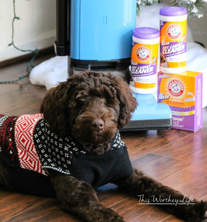 tips on keeping your house clean when you have a dog