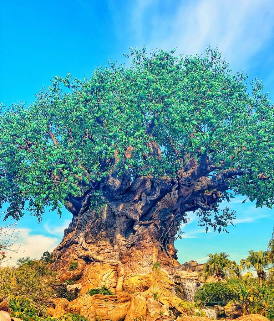 Animal Kingdom Bucket List: 30 Things You Should Do