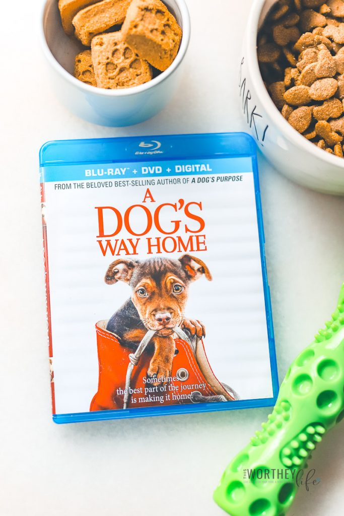 A DOG'S WAY HOME DVD relesae