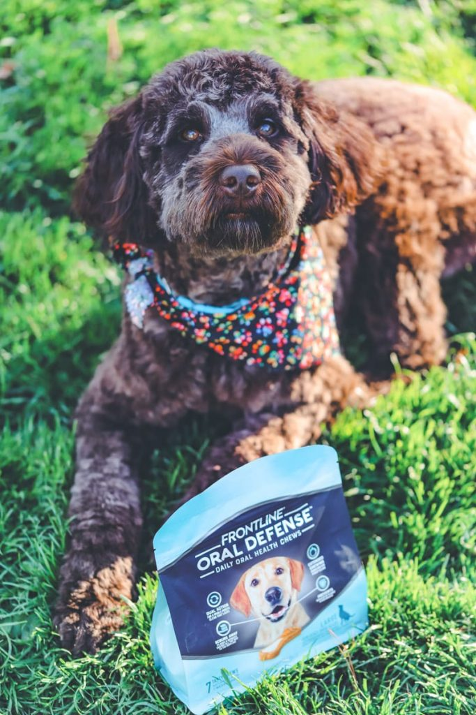 The Best Dog Oral Products