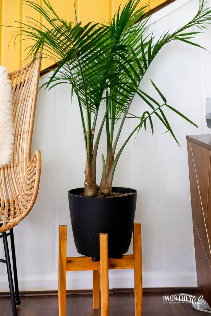 How to pick the best houseplants for your home