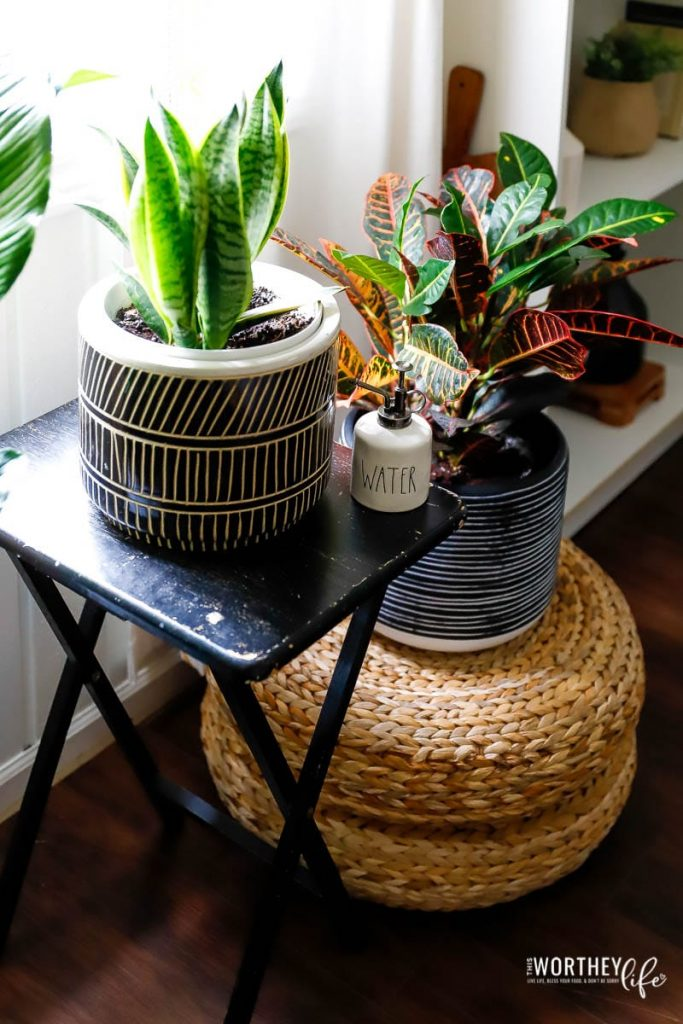 Building balance with houseplants