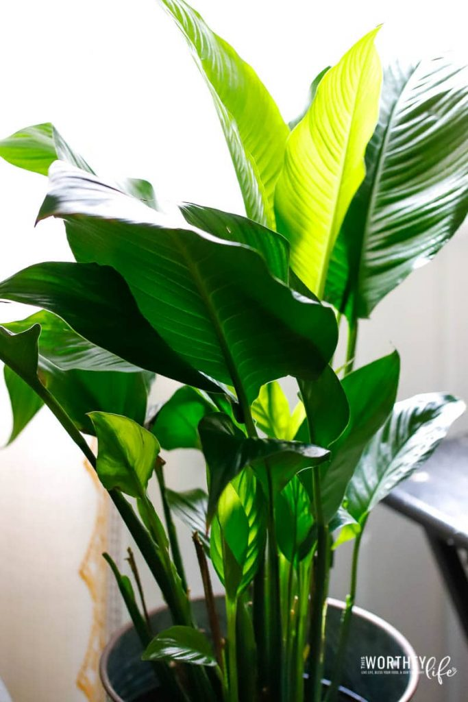 Houseplant basics for the beginner