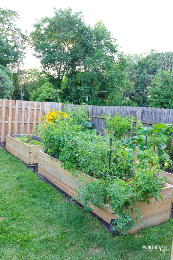 The W garden